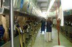 حمایت ۲۵۰میلیاردی بانک کشاورزی از راهاندازی گاوداری شیری ۳۰۰۰ راسی در روستای ساتلو خسروشاه