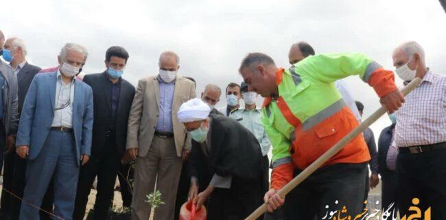 کاشت ۳۶۰۰ نهال پسته به نفع خانواده های کم برخوردار و توسعه فضای سبز در خسروشاه